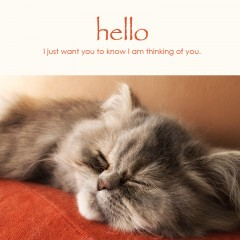 Hello e-card: I just want you to know I am thinking of you — $1.95