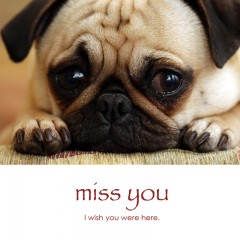 Miss you e-card: I wish you were here — $1.95